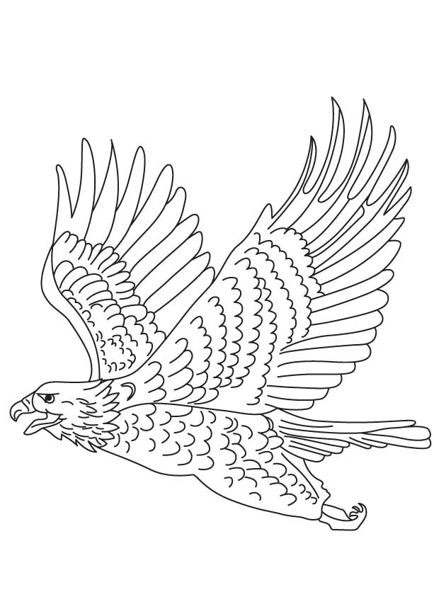 Short toed snake eagle coloring page | Download Free Short toed