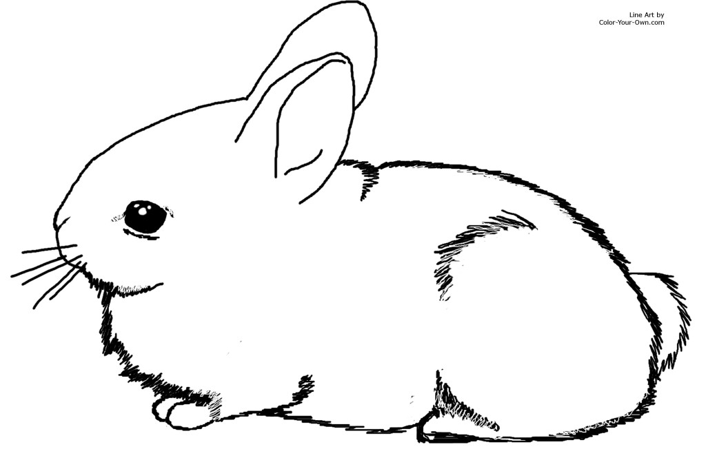 Bunny Rabbits Coloring Pages