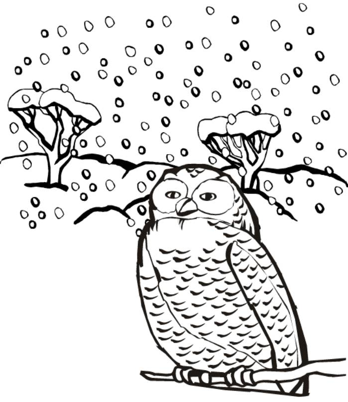 print snow owl winter animal coloring pages