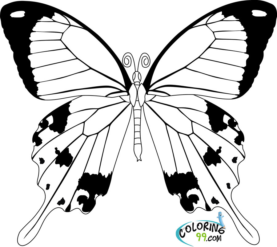 Butterfly Life Cycle Coloring Page Az Coloring Pages Butterfly Cycle Coloring Page