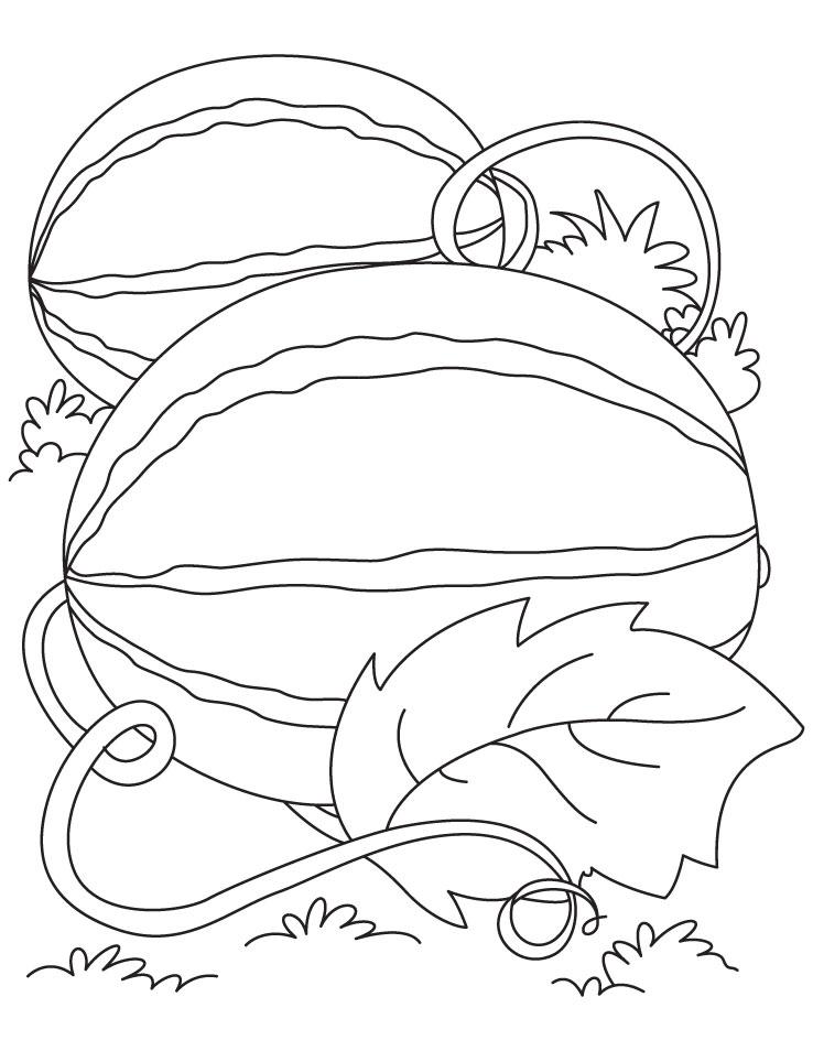 watermelon coloring page az coloring pages
