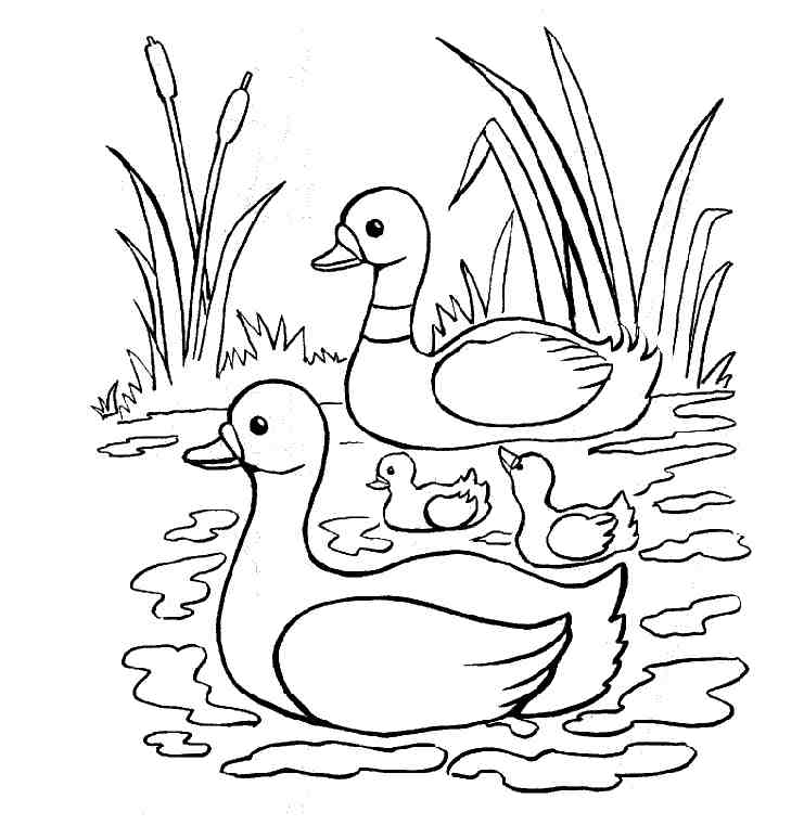 Cute Ducks Free Coloring Page