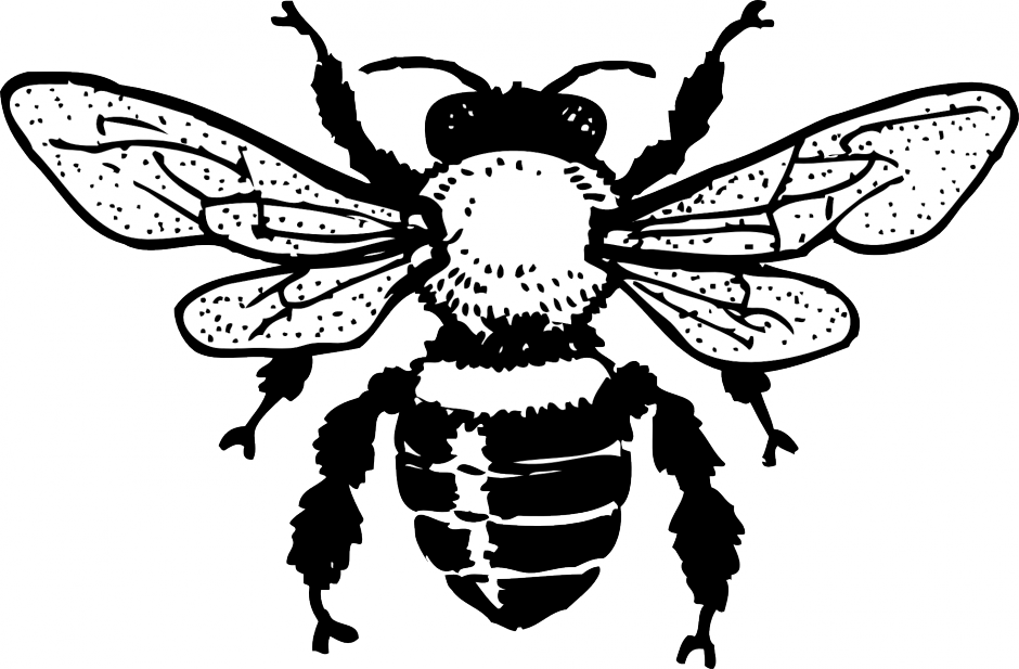 Honey Bee Coloring Page Coloring Home Honey Bee Coloring Page