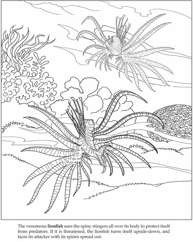 ocean animals plants coloring pages - photo#4
