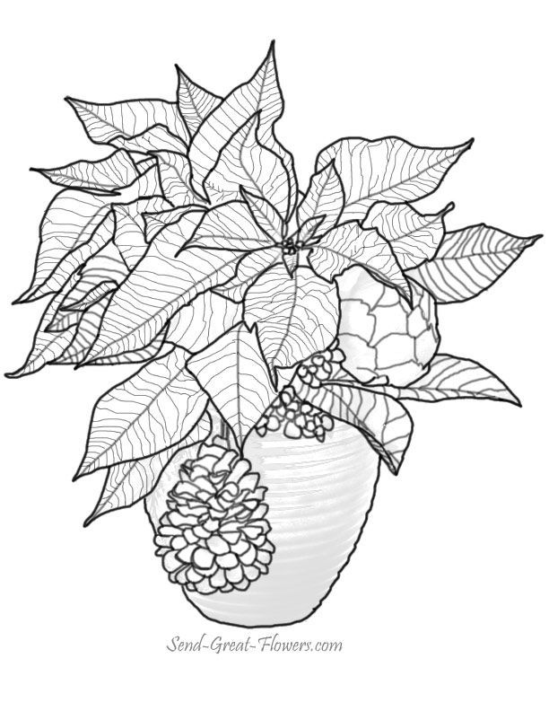 pointsettas coloring pages - photo#31