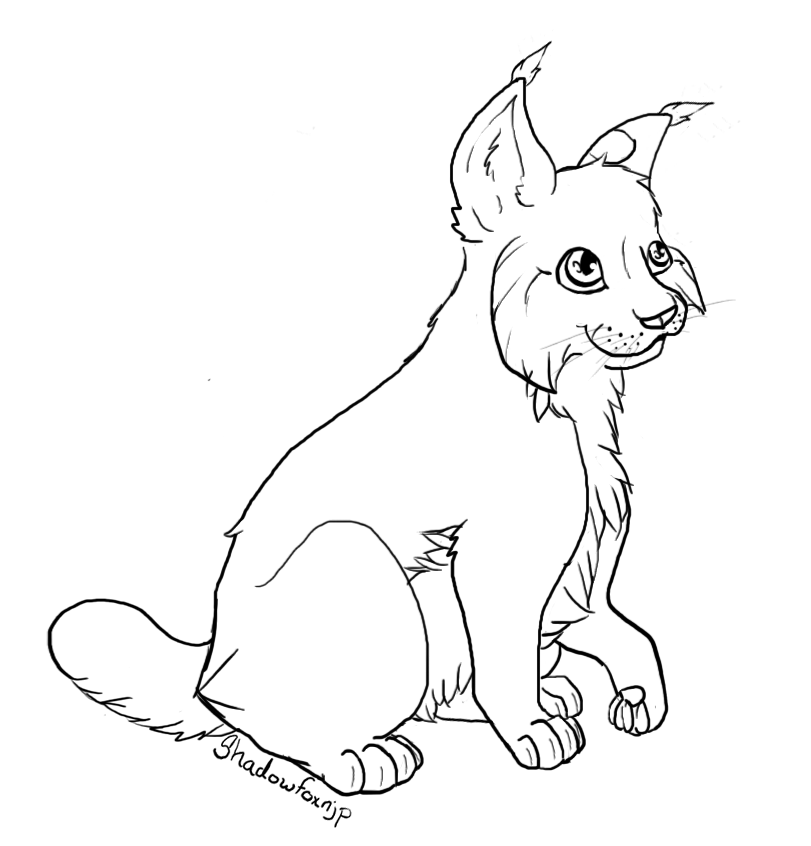 lynx coloring pages for kids - photo#4