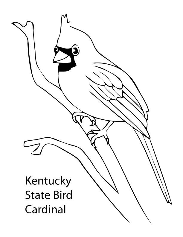 Cardinal coloring pages preschool halloween ~ Bird Coloring Pages For Preschoolers - Coloring Home