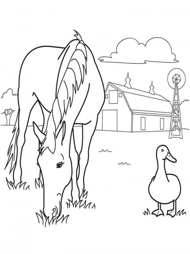 Wild Horse Coloring Pages 30209 Label Free Printable