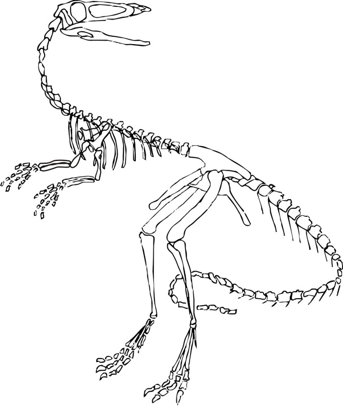 Dinosaur fossil coloring pages az coloring pages for Fossil coloring pages