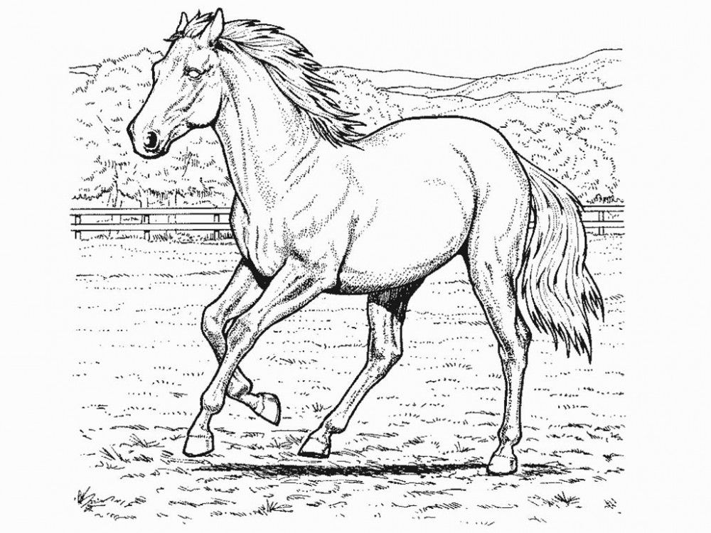Horse Coloring Page - Coloring Home