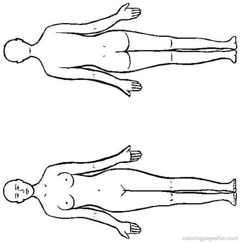 Human Anatomy Coloring Pages Printable Human Anatomy Coloring Pages 8