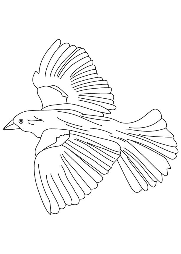 Flying Bird Coloring Pages - Coloring Home