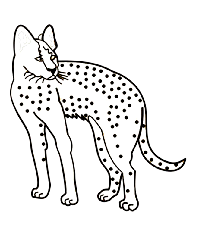 baby cheetah coloring pages - photo#35