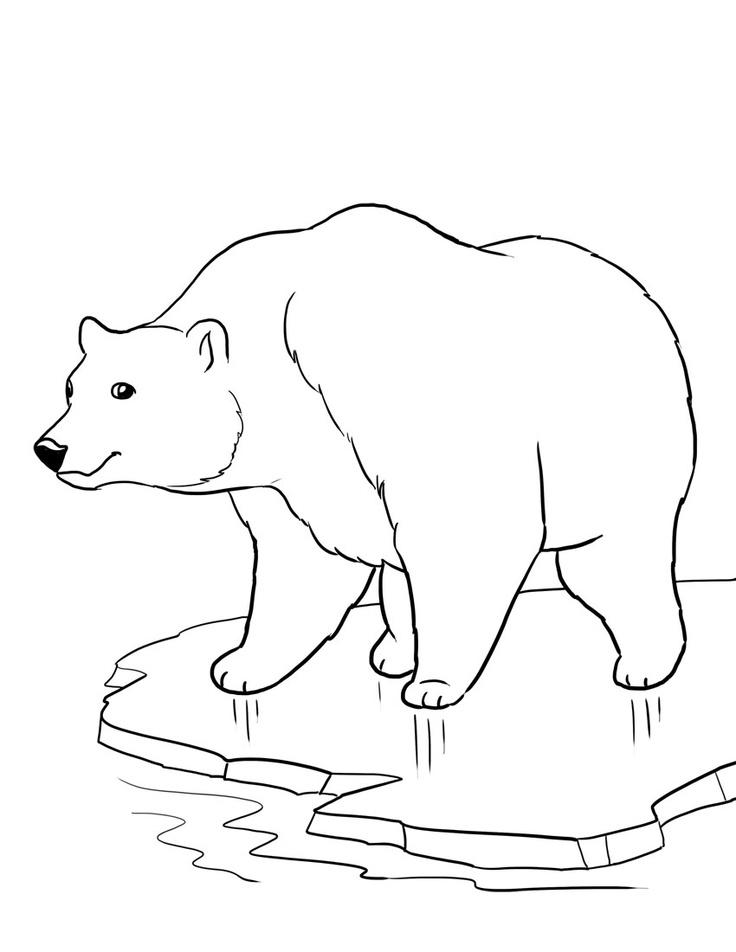 Рисунки белый медведь раскраски