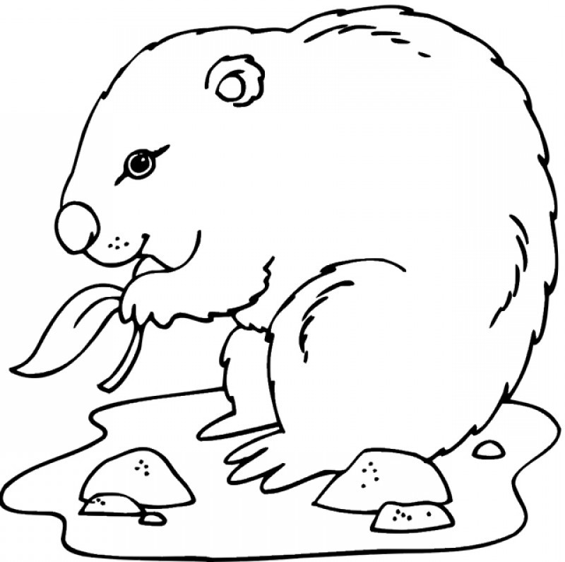 woodchuck coloring pages for kids - photo#15