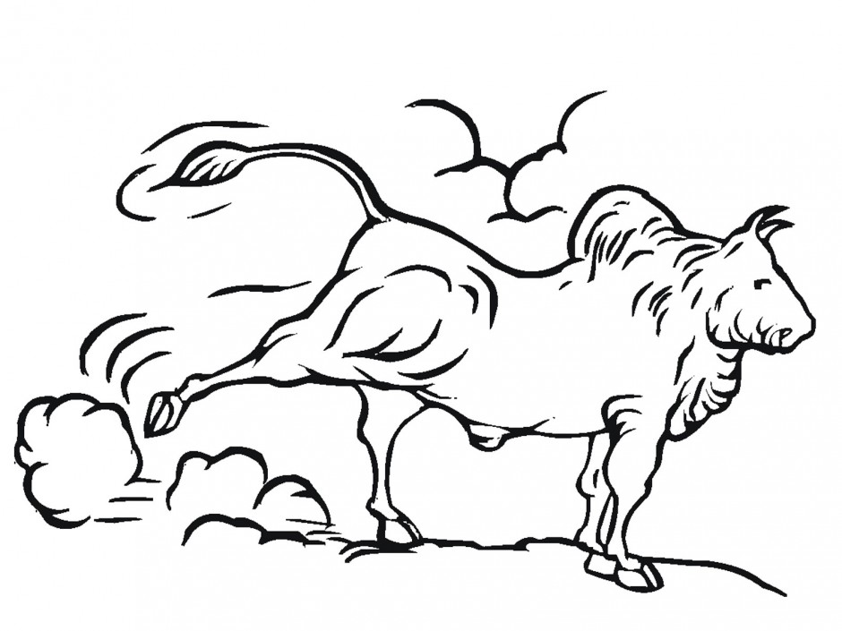 Bull Riding Coloring Pages Free Coloring Pages 270926 Bull Riding