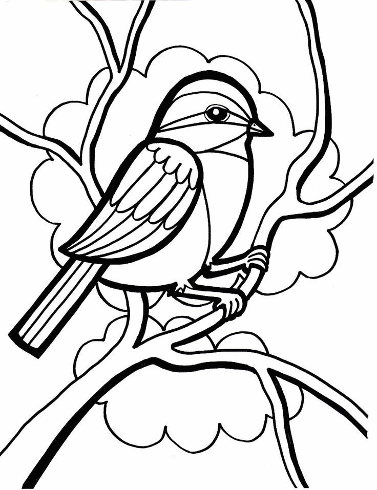 Sparrow coloring pages - photo#15
