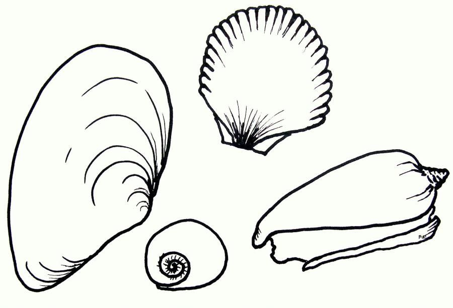 Animal Coloring Seashell Coloring Pages More Beach Scene Coloring