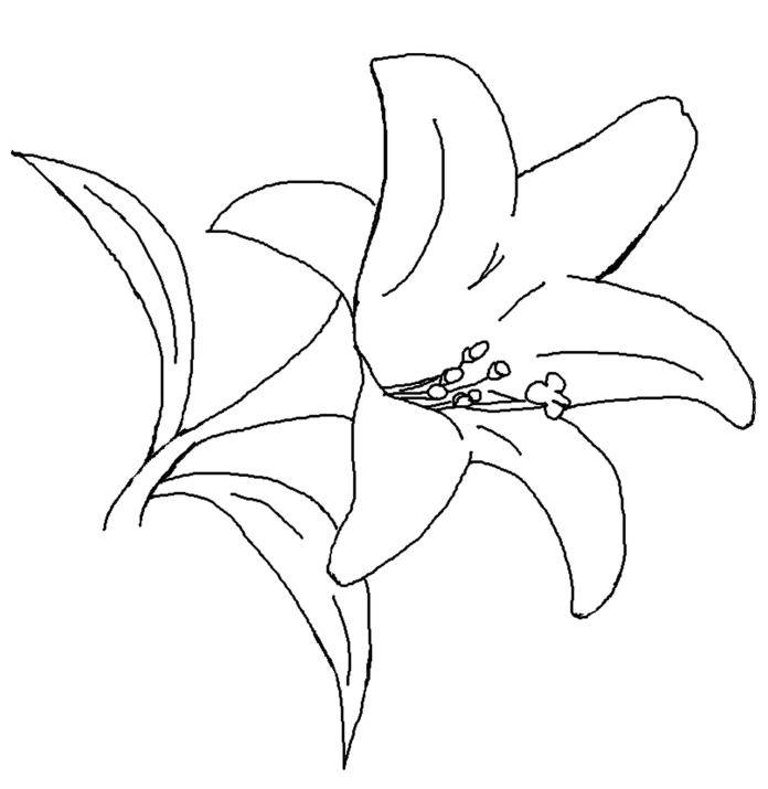 easy lily coloring pages - photo #24
