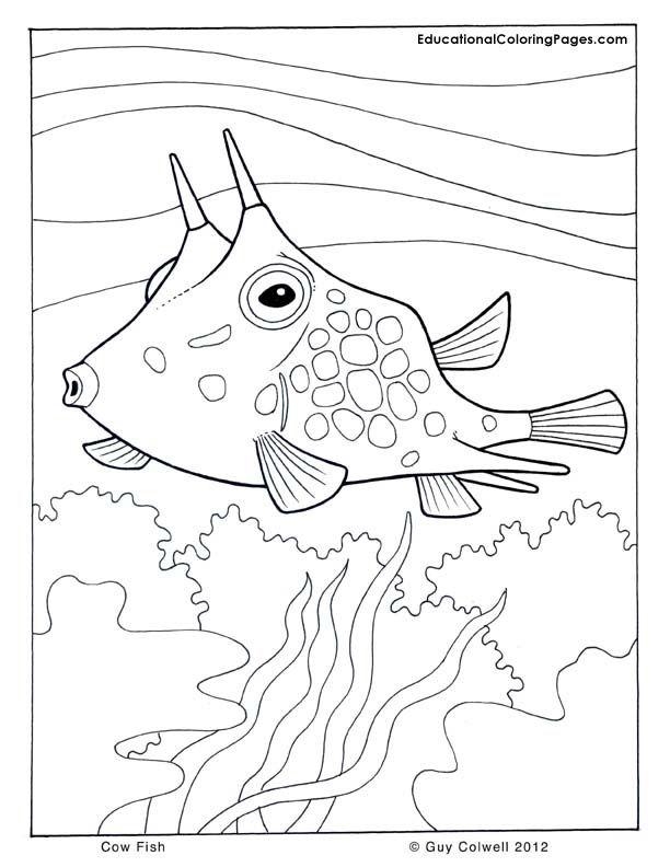 Coloring Pages Sea Animals AZ