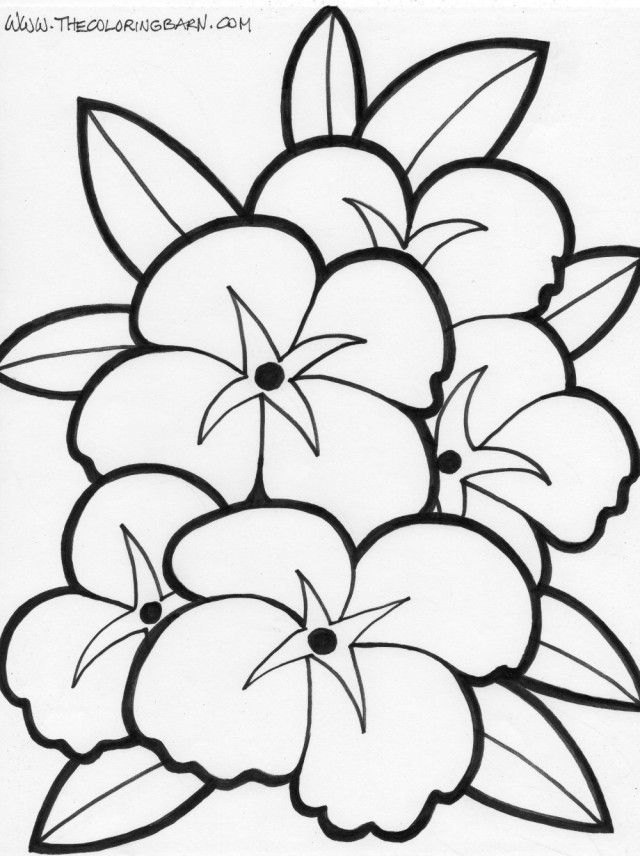 printable hawaiian flowers coloring pages - photo#7
