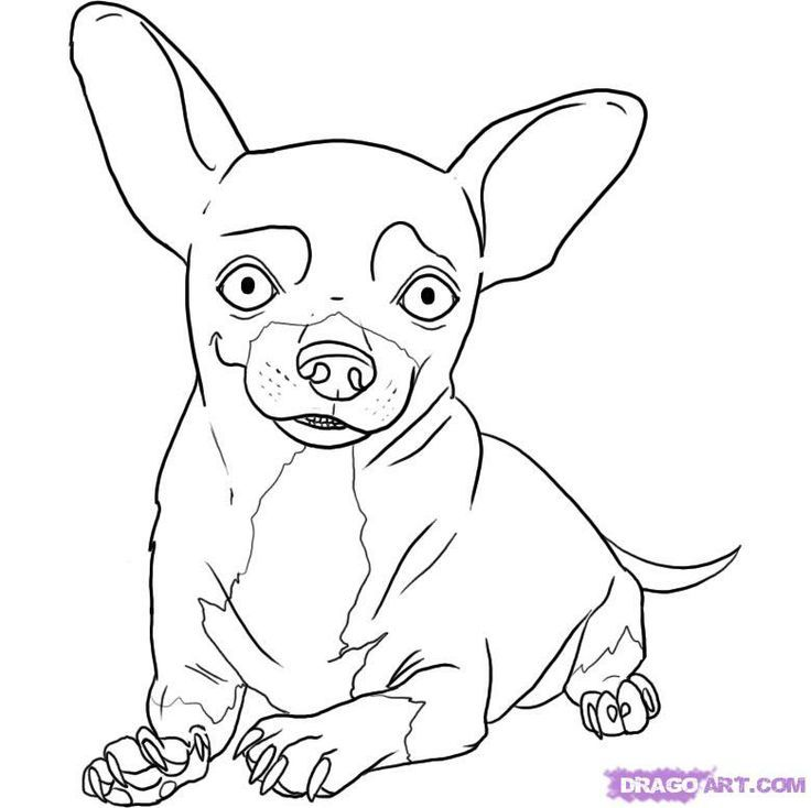 Chihuahua coloring pages coloring home for Chihuahua coloring pages