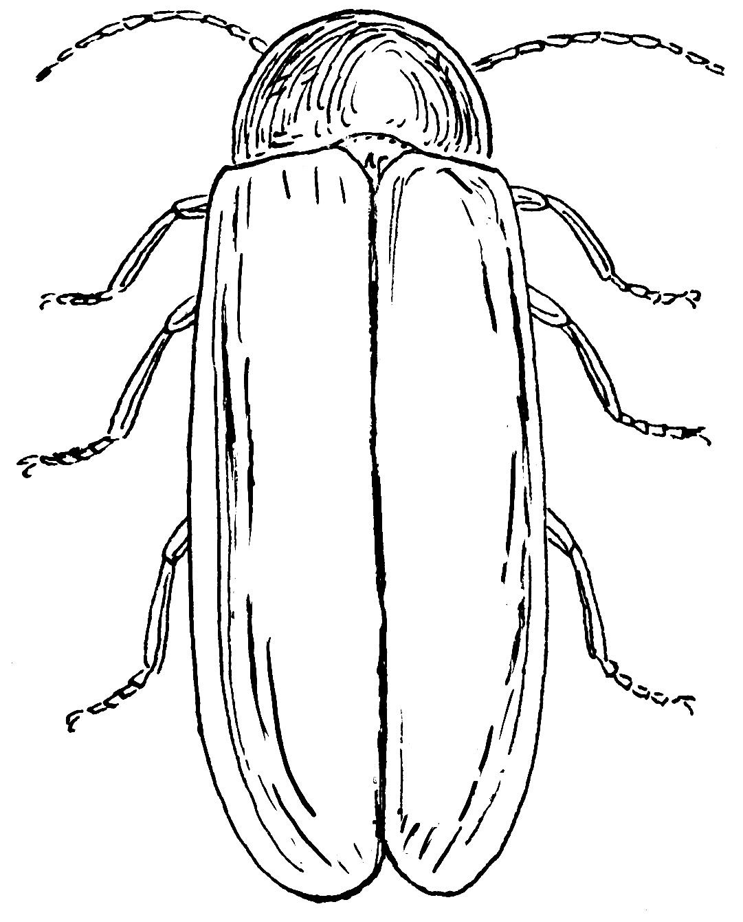 lightning bug coloring pages coloring home