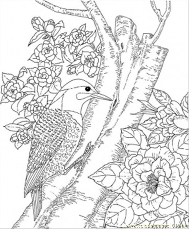 free wild birds coloring pages - photo#20