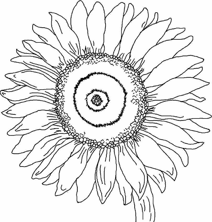 Printable Free Sunflower Flowers Colouring Pages For Little Kids #