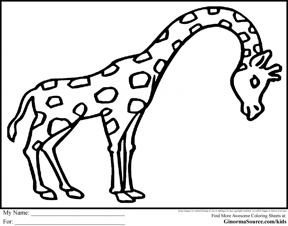 Coloring Pages For Rainforest 246565 Australian Animals