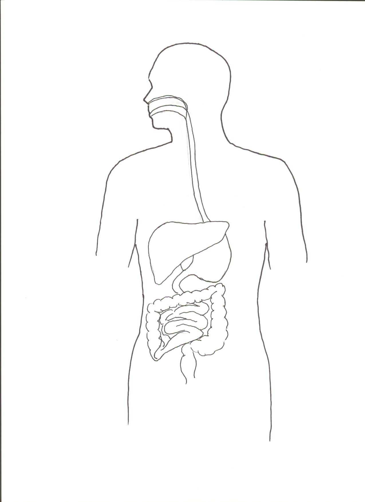 Digestive System Coloring Page - Coloring Home