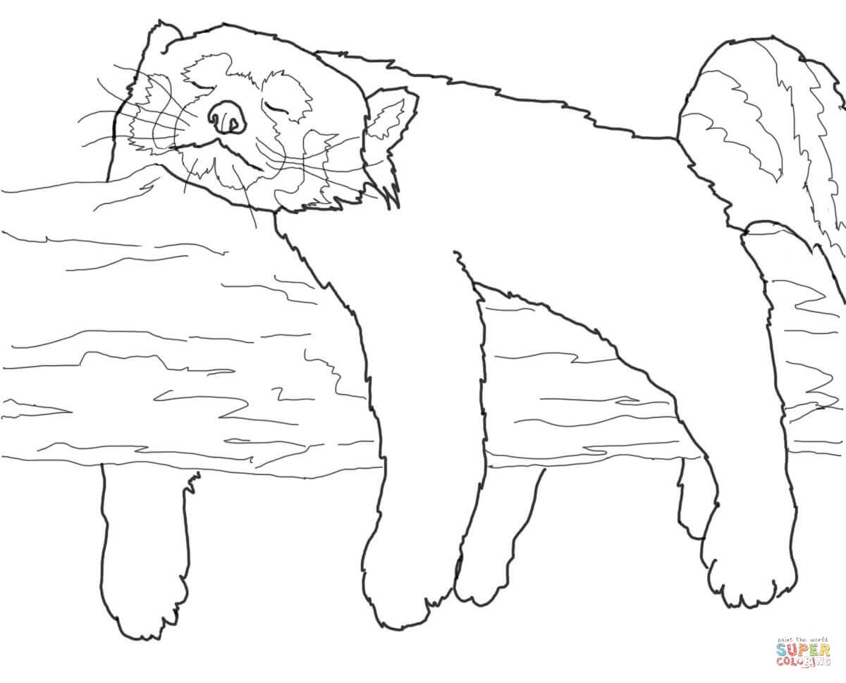 Red Panda Sleeping coloring page | Free Printable Coloring Pages