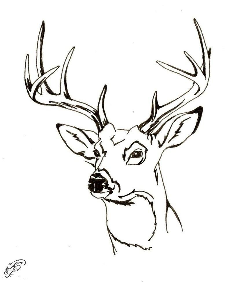 reindeer tail template - buck and doe coloring pages coloring home