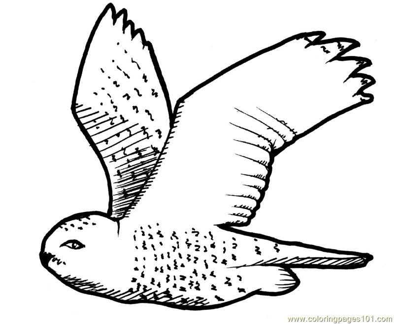 9 Pics Of Cartoon Owl Coloring Pages Detailed  Cute Detailed Owl