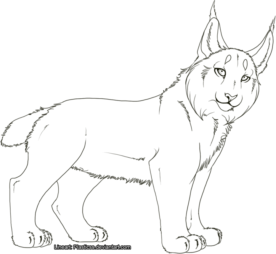 lynx coloring pages for kids - photo#18