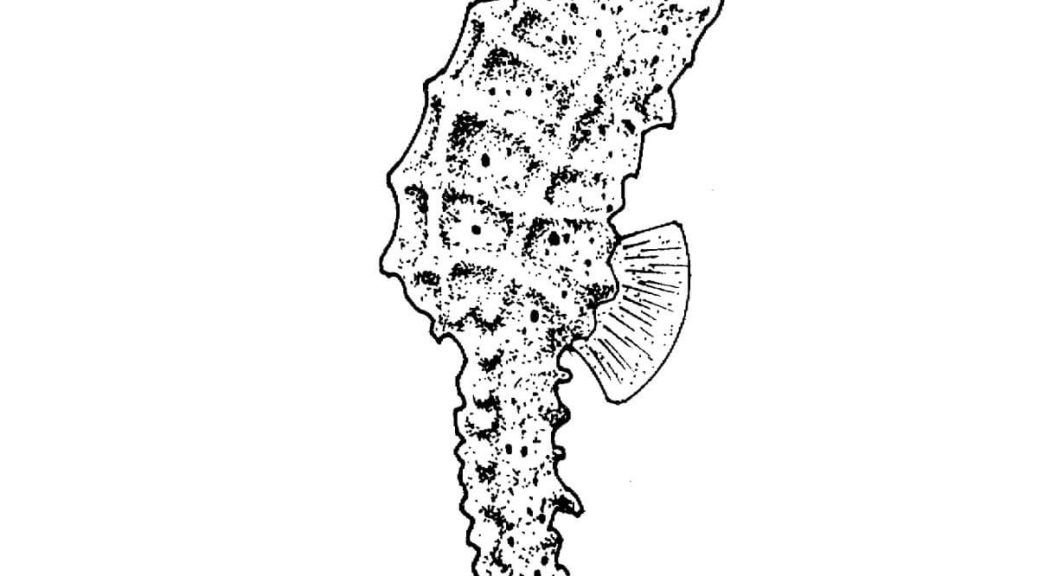 adult coloring pages seahorse | Coloring Pages