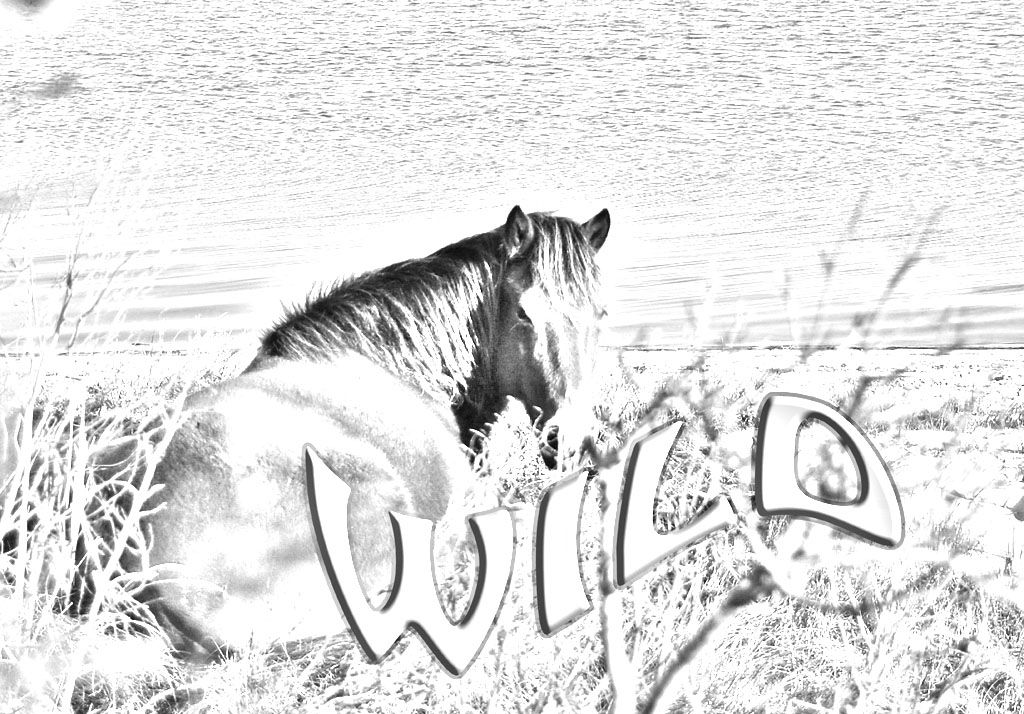 realistic horse coloring pages resume format download pdf
