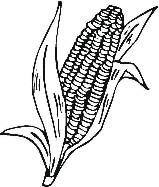 corn stalks coloring pages - photo#12