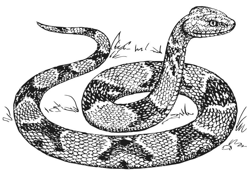 Free Printable Snake Coloring Page Coloring Home