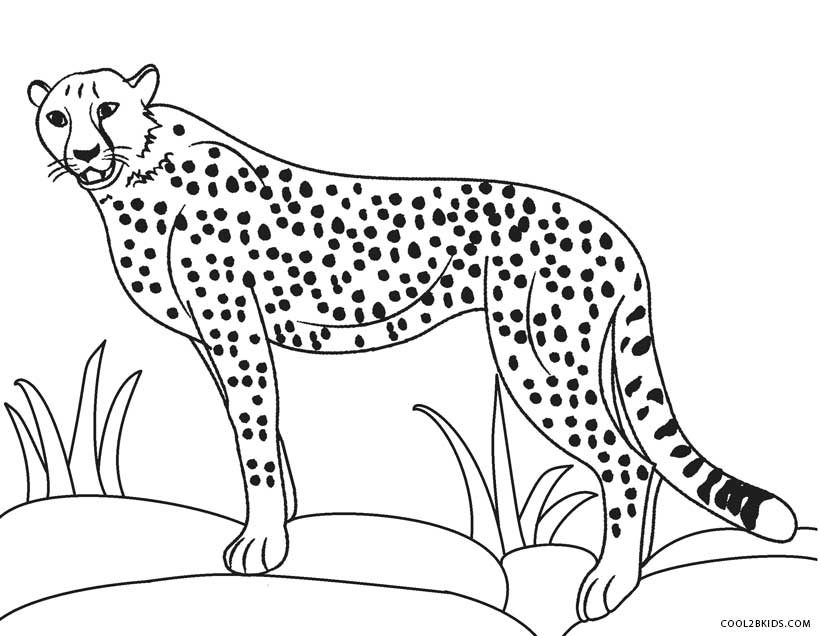 What Color Is A Cheetah  Coloring Home