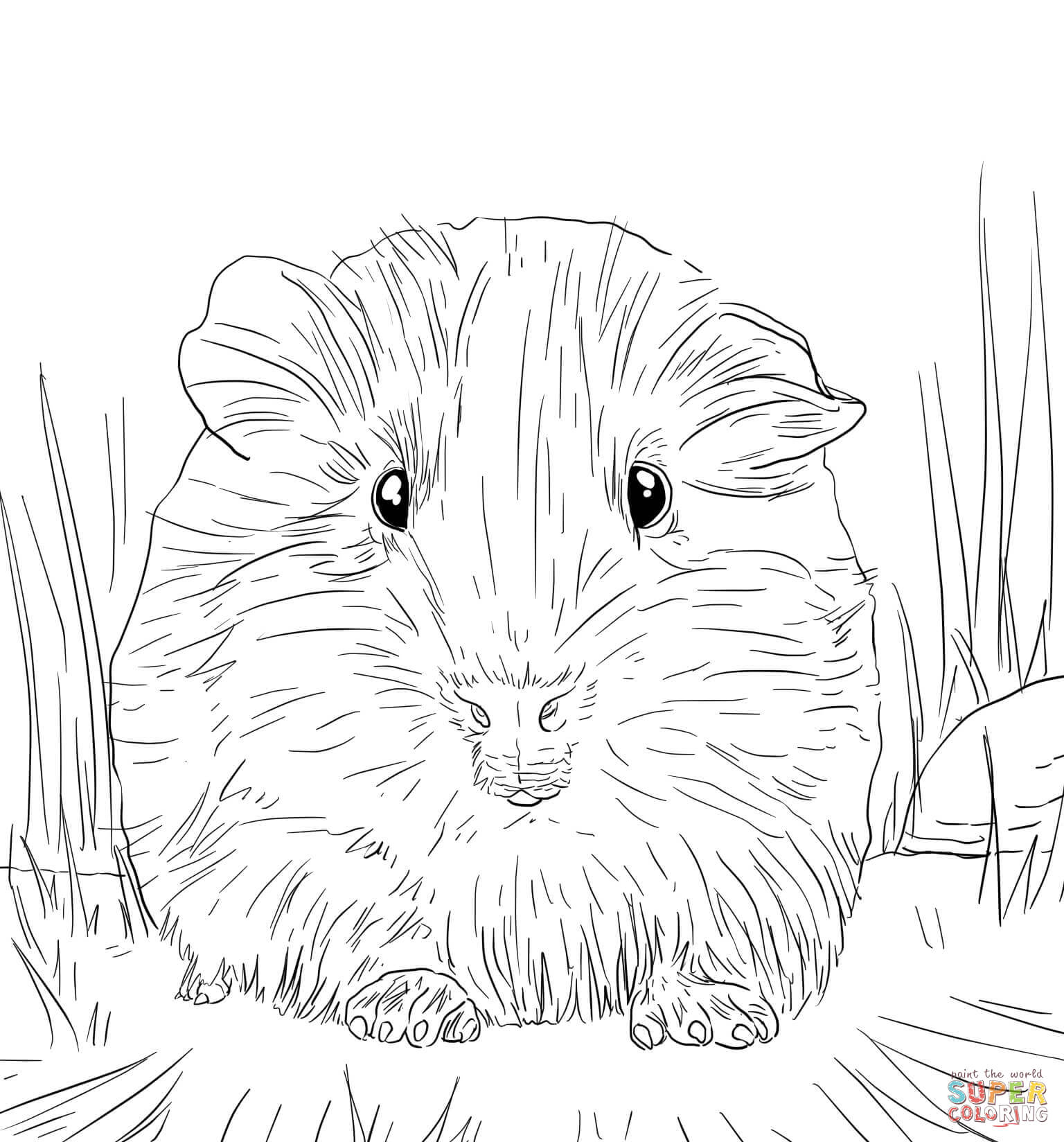 Printable coloring pages guinea pigs - Guinea Pig Coloring Pages Free Coloring Pages