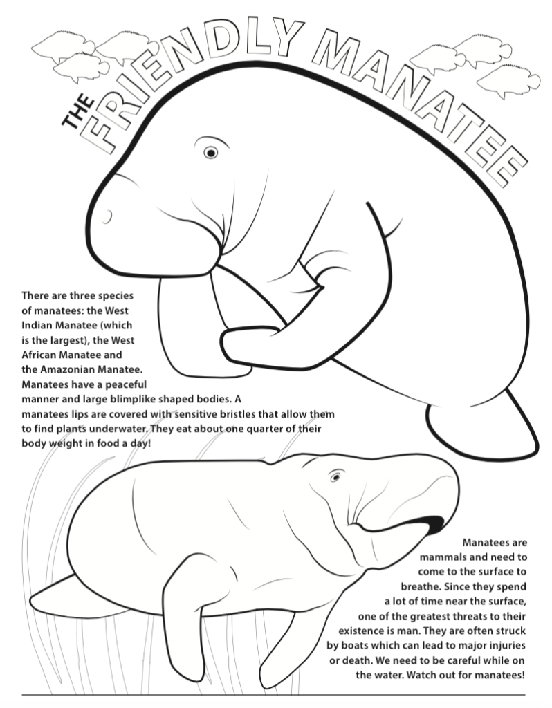 Manatee Information Coloring Pages
