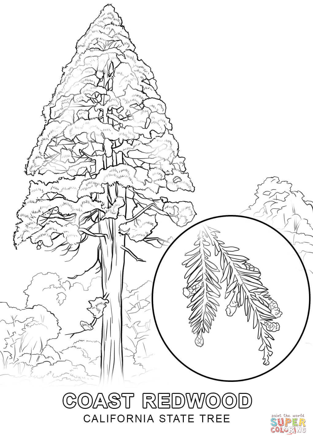 washington state tree coloring page high quality coloring pages