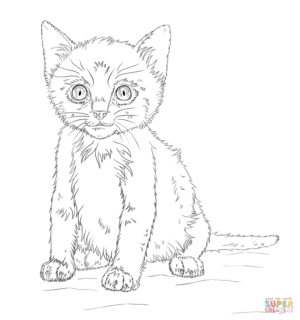 Kitten Coloring Page | Free Printable Coloring Pages - Coloring Home
