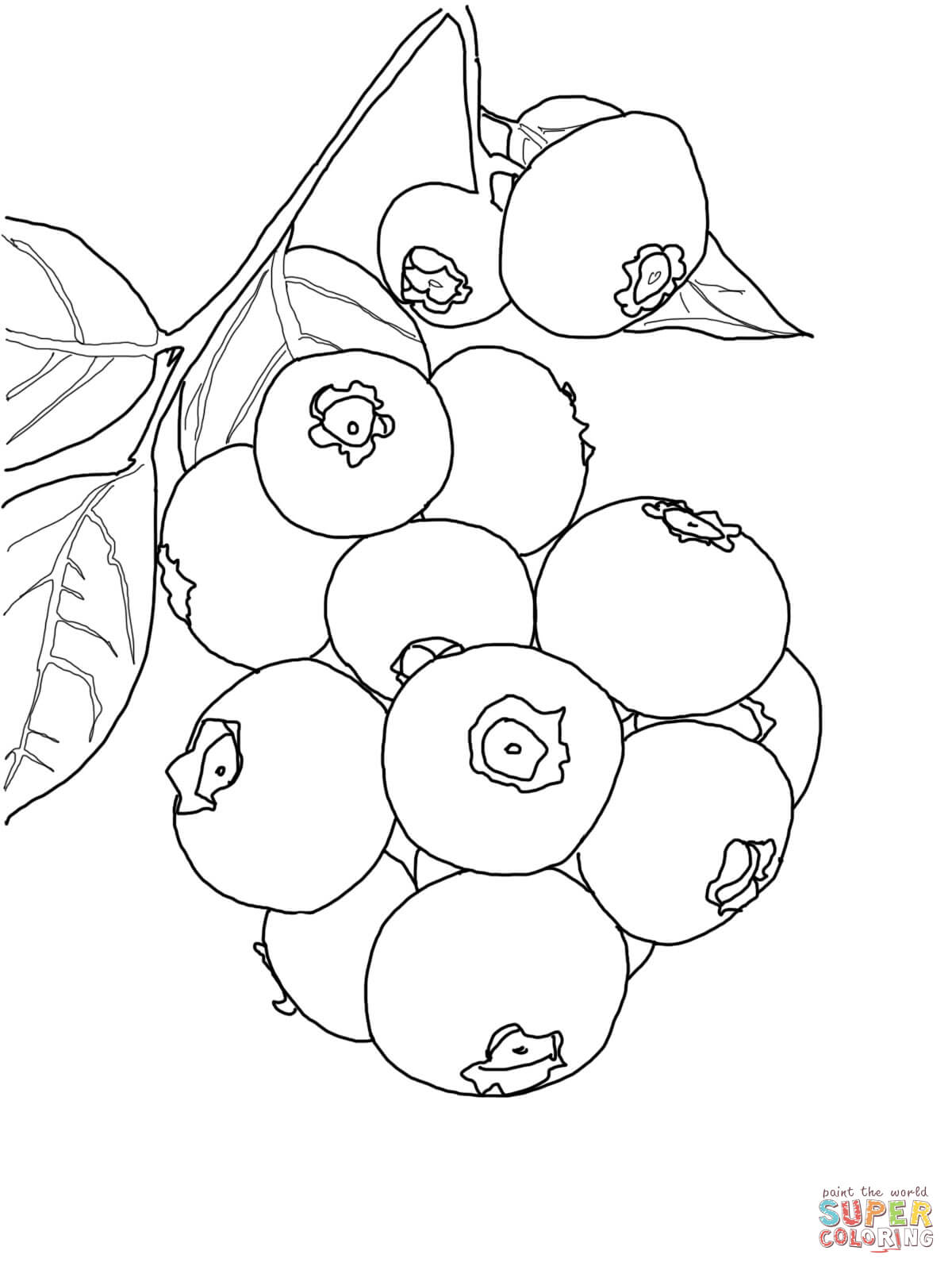 Blueberry Coloring Pages Free