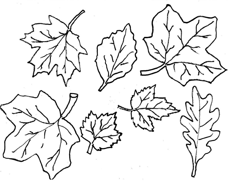 Leaf Coloring Pages Pdf : Leaf outline printable