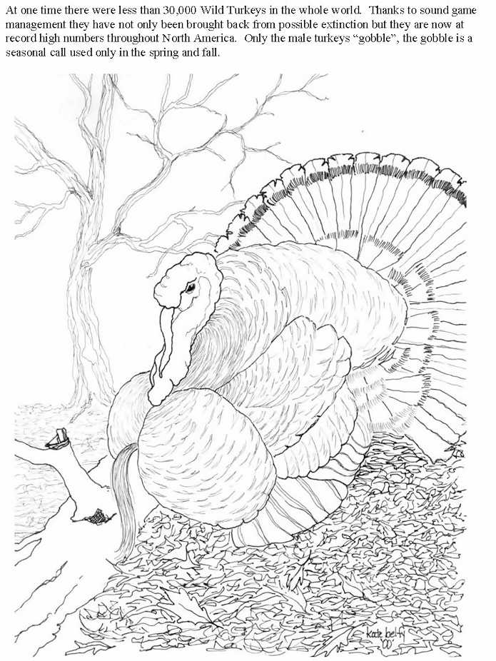 Wild Turkey Coloring Pages Coloring Home