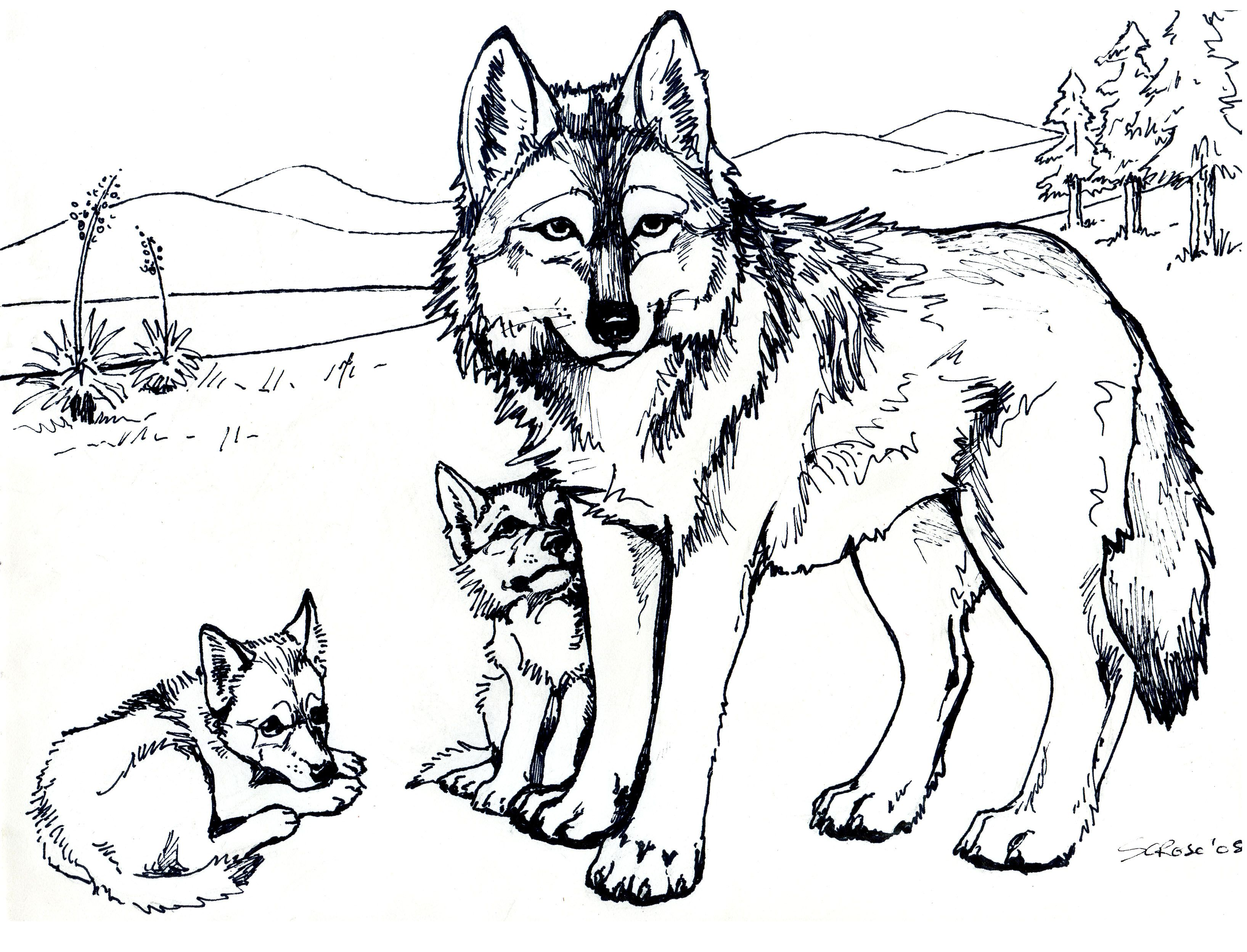 Arctic Wolf Cute Coloring Pages Free Printable For Kids