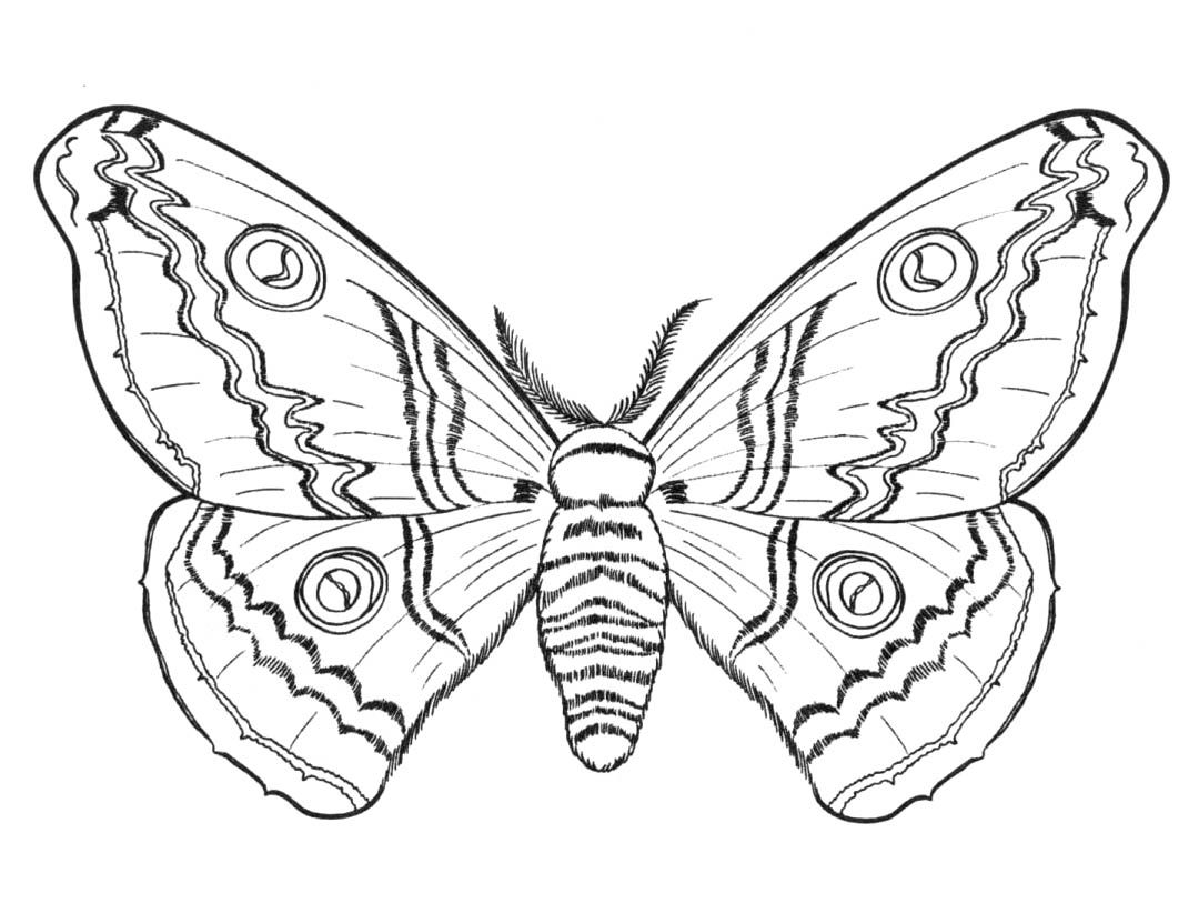 Butterflies and insects coloring pages 21 / Butterflies and ...