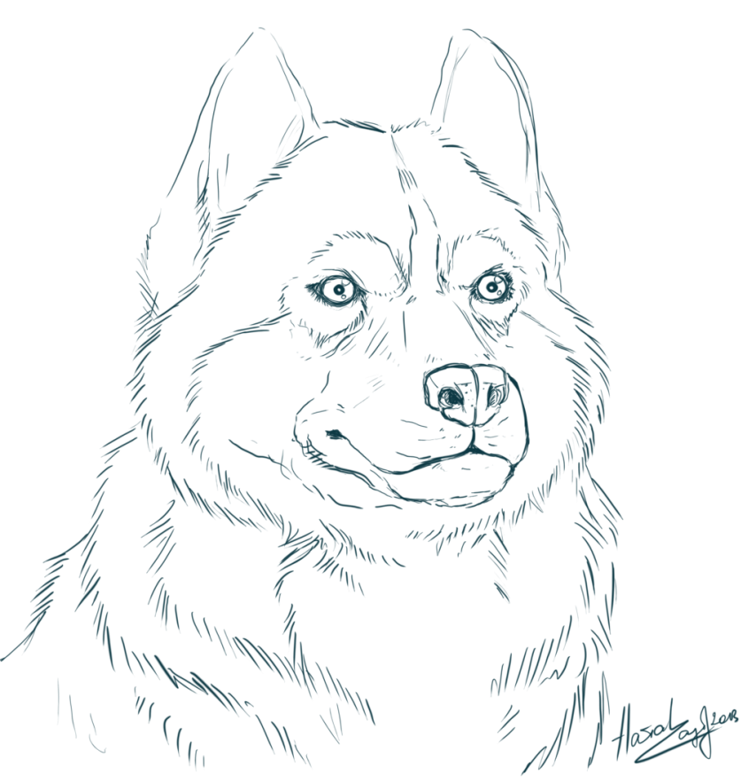 Coloring Husky Coloring Page Husky Coloring Page Coloring ...
